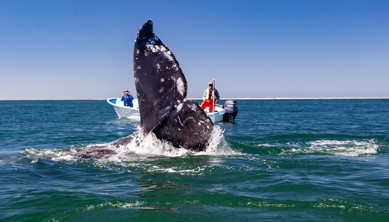 World of Whales & Whalesharks