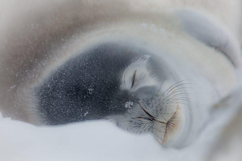Antarctic Peninsula & South Shetlands