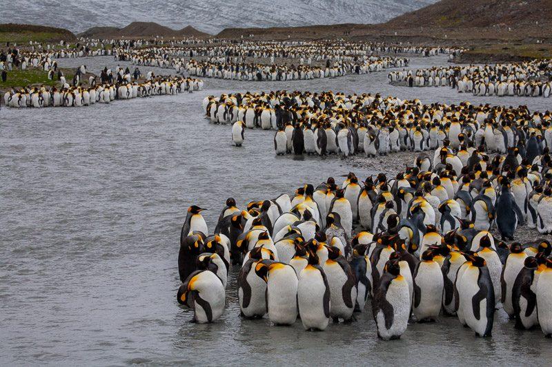 South Georgia - Subantarctic